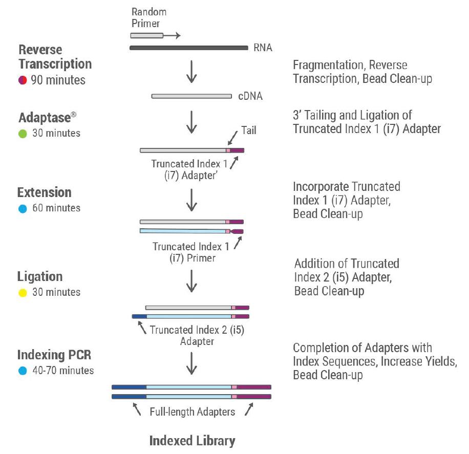 RNA-seq Library Prep